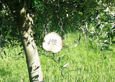 een geadopteerde olijfboom